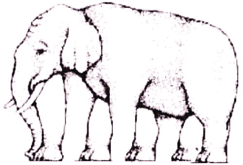 Elephant with five legs