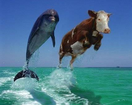 Dolphin and cow in ocean